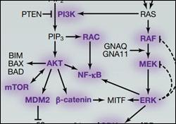 SnapShot from Cell Press: Melanoma
