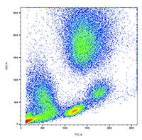 Analysis of lysed whole blood. SSC vs. FSC density plot